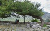 Under the Pine.jpg