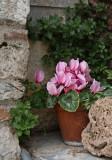 Monastery Flowers.jpg