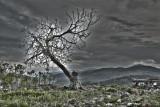 Ypsilometopo Tree1.jpg