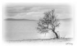 Kalloni tree3.jpg