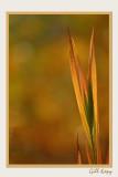Fall grass14.jpg