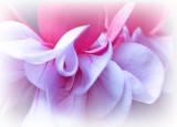 Summer petals.jpg