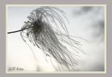 Blowing in the Wind.jpg