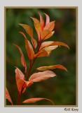 Fall leaves7.jpg