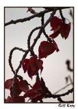 Clinging Leaves.jpg