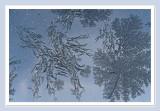 Frost on glass.jpg
