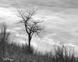 Tree on Ice2.jpg