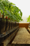 Lepoidevins Greenhouse.jpg
