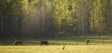 Copper T Ranch.jpg