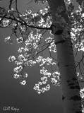 Summer leaves2.jpg