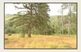 Summer meadow.jpg