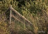 Fallen fence2.jpg