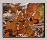 Leaves turning.jpg
