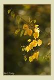 Turning leaves.jpg