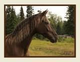 Ginnys horse.jpg