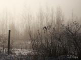 Morning fog2.jpg