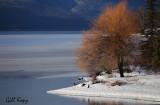 Winter Willow.jpg