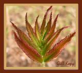 Spring Leaves6.jpg