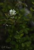 Lonely blossom.jpg