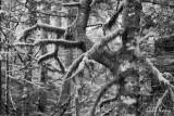 Rain Forest4.jpg
