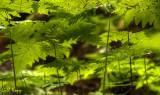 Sinking in ferns.jpg