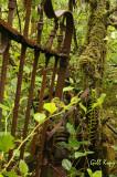 Port Essington Graveyard6.jpg