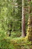 Forest Greenery.jpg