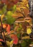 Fall colours5.jpg