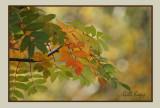 Leaves turning2.jpg