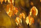 Fall leaves9.jpg