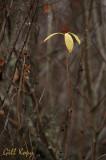 Last leaves2.jpg