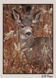 Fall deer3.jpg