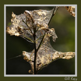 Caterpillar haven.jpg