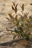 Sand growth.jpg