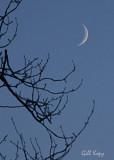 November moon.jpg