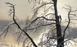Frosty tree2.jpg