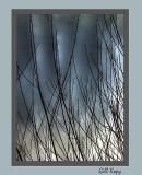 Surreal Willows.jpg