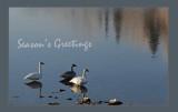 Autumn Swans.jpg