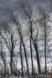Lined up trees.jpg