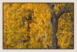 Autumn leaves8.jpg
