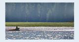 Sea Swamp Forest.jpg