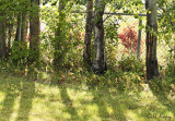 Summer fence.jpg