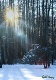 Winter sun3.jpg