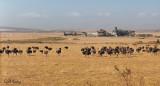 Karoo ostrich farm.jpg