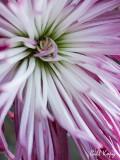 Petals2.jpg