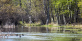 By the Pond.jpg