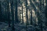 Nakusp forest3.jpg