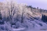 Stellako winter.jpg