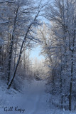 Winter trail.jpg