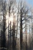 Sunlit trees.jpg